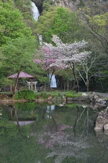 新潟、不動滝いこいの里キャンプ場1.jpg